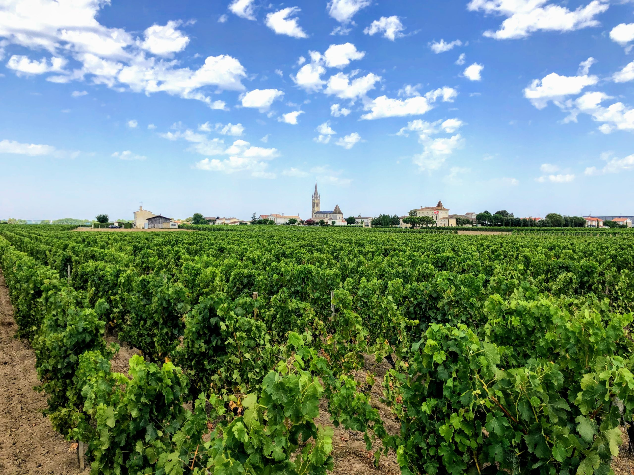 Pomerol vineyards